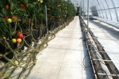 Greenhouses often use W-Beam Guardrail for water reclamation