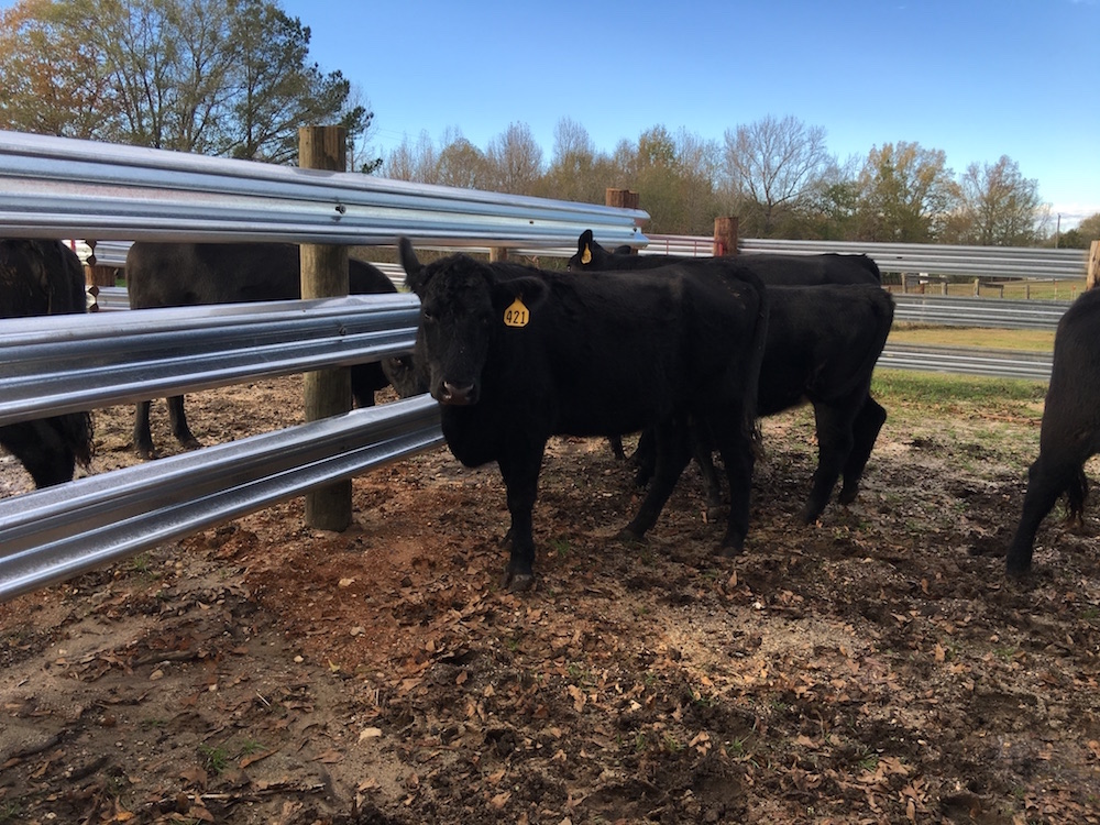 Livestock Steel is a galvanized, roll-formed livestock fencing panel made to match up seamlessly with standard used highway guardrails.