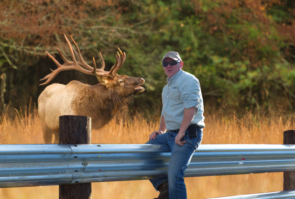 Guardrail will even hold back the mighty elk of the rockies