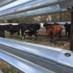 LiveStock Steel Corral